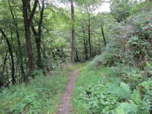 Trail am Selve Denkmal