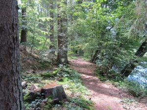 Trail hinunter nach Bad Honnef