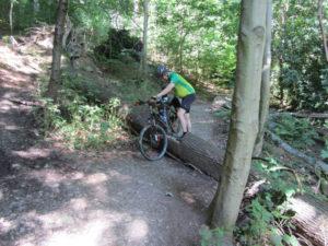 Hindernisse auf dem Trail